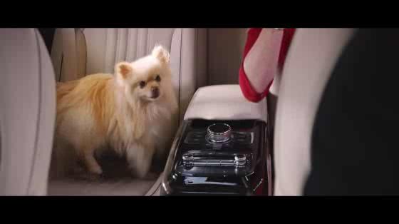 Driver Versus Dog