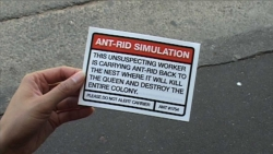 The live Ant-Rid simulation